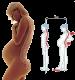 Femme enceinte osteopathie