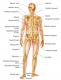 Osteologie
